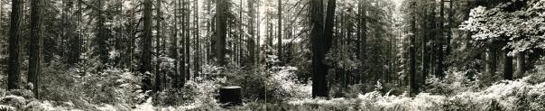 Forest Panorama with Samuel H. Boardman