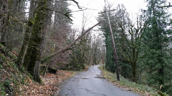 Tree Over Power Lines at Latourell